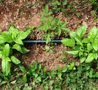 Orto, cosa piantare a fine inverno