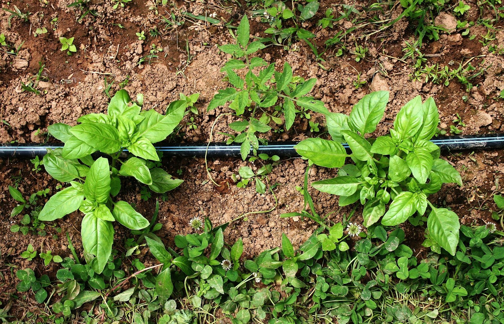 Cosa Piantare A Febbraio orto, cosa piantare a fine inverno