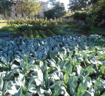 Un orto da RE: abbiamo fatto 100 con un giardino da perdere il fiato