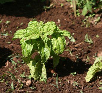 Aprile nell'orto, le cure di stagione