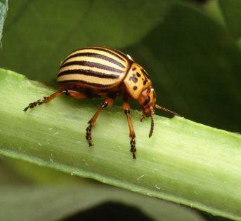 Gli insetti nemici dell'orto: conoscerli per contrastarli