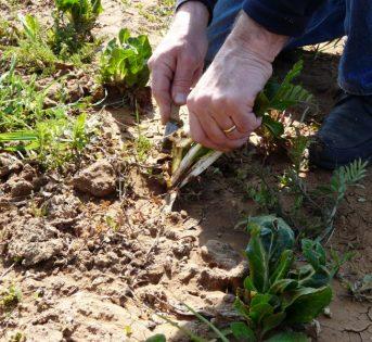 Orto in casa: come fare il semenzaio