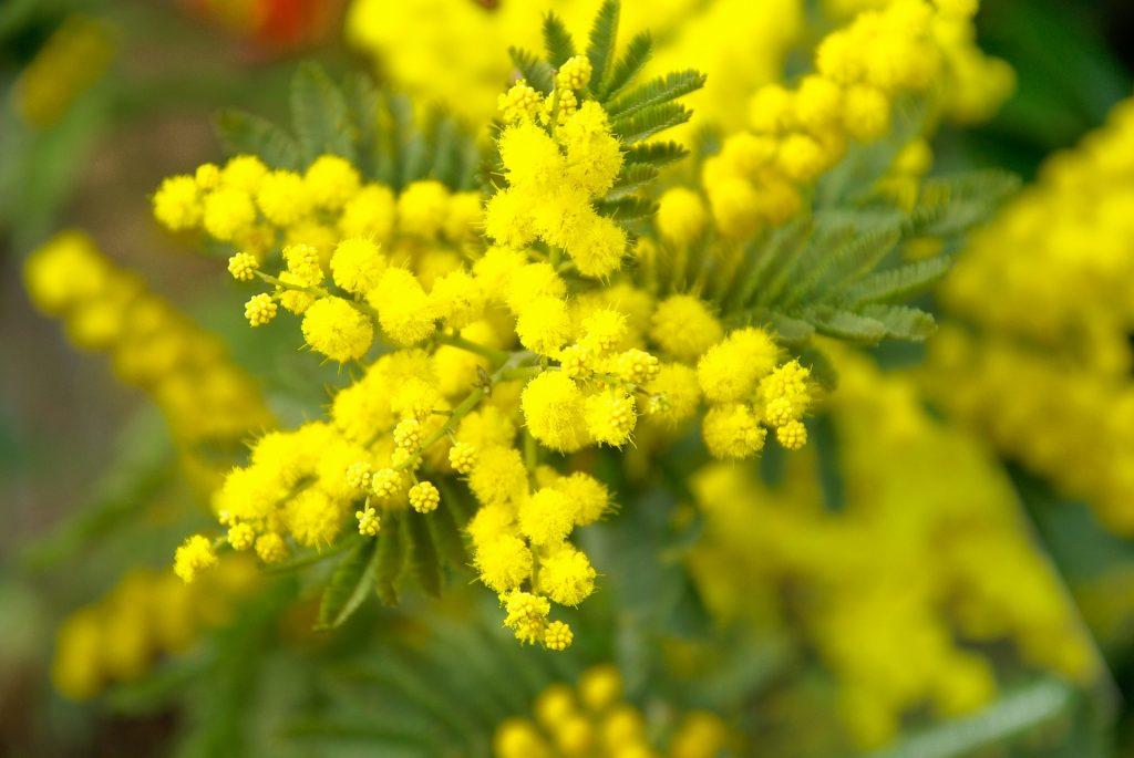 Caldo, piante in fiore fuori stagione. Natura in tilt