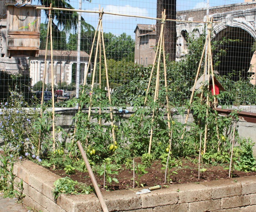 Sostegni Per Pomodori In Vaso sostegni e tutori, piccoli segreti nell'orto primaverile