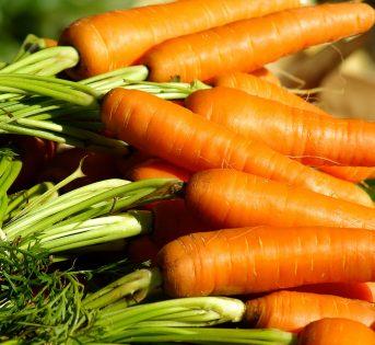 La carota sul balcone