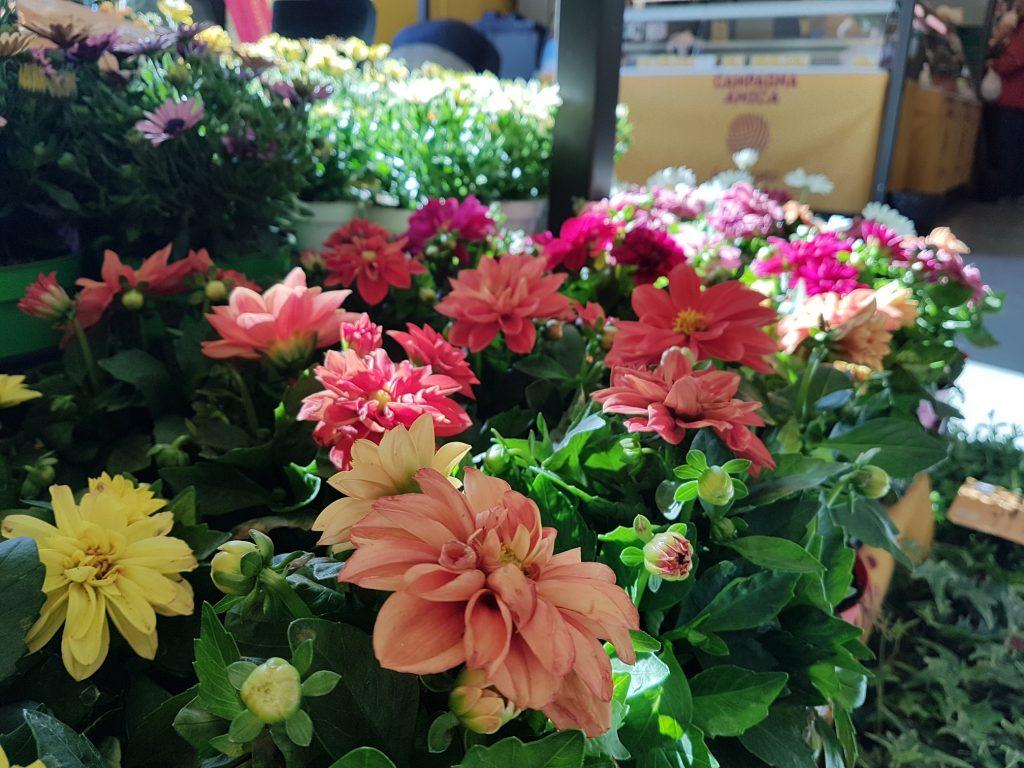 Immagini Piante E Fiori made in italy, export record per piante e fiori
