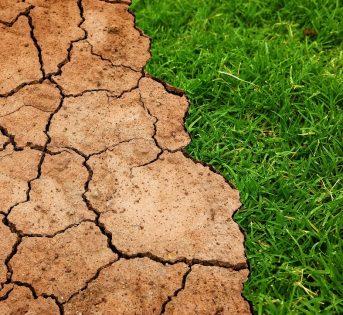 La biodiversità fattore di resilienza nel mondo
