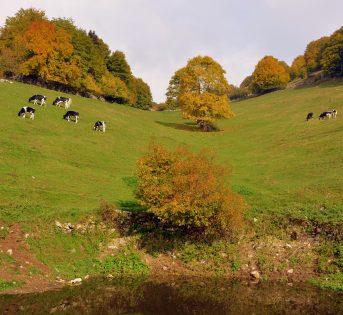 Il bel Paese della natura: agricoltura e biodiversità