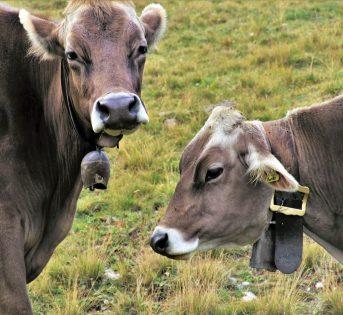 Il filo invisibile fra biodiversità e agricoltura sociale