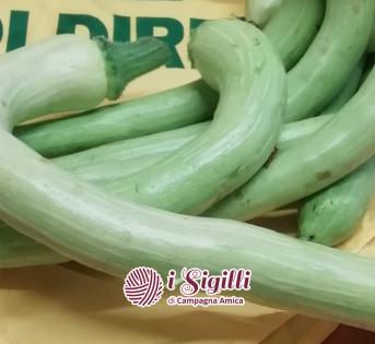 Le nostre zucchine sono differenti