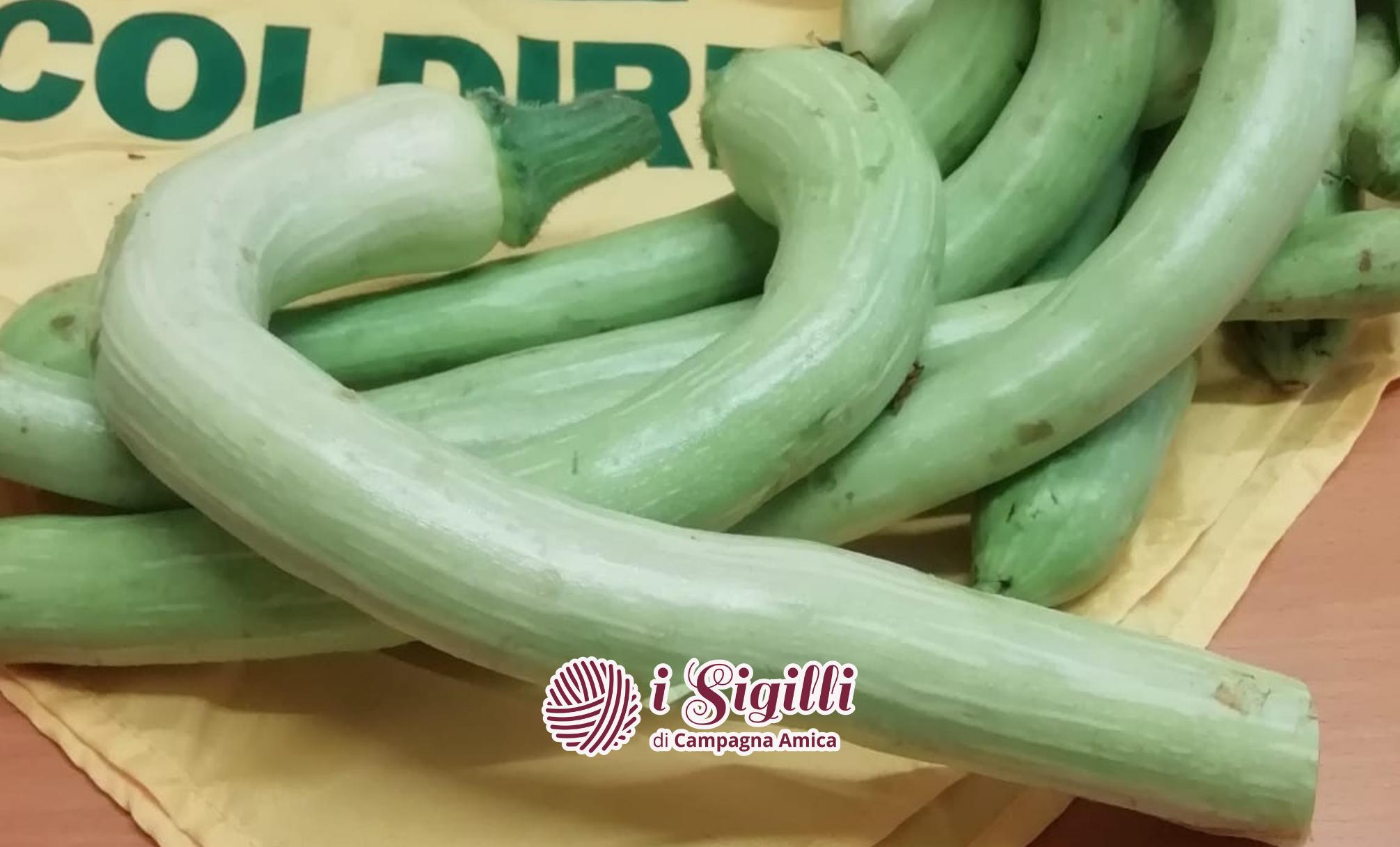 Varietà Zucchine Da Fiore le nostre zucchine sono differenti