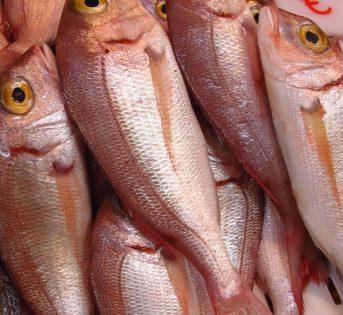 F… come fragolino, il pesce adatto ai bambini
