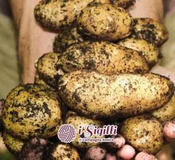Patate, il tubero dalle mille varietà