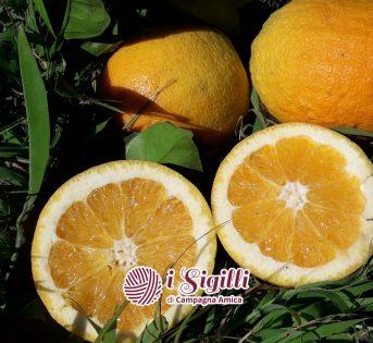 Una spremuta di vitamina C con i Sigilli di Campagna Amica