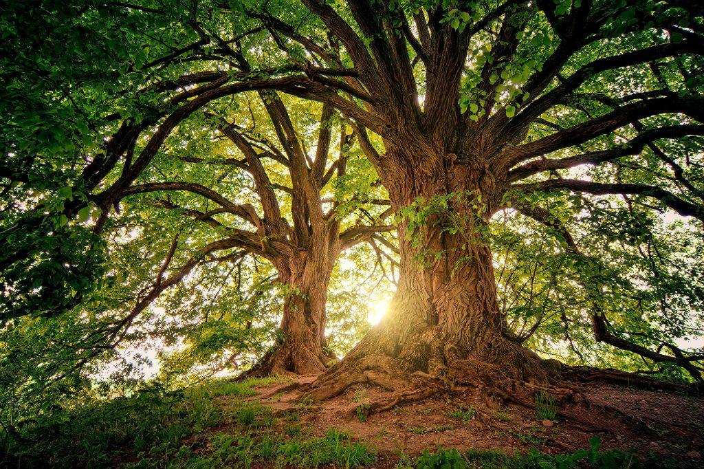 I nostri amici alberi: il 21 Novembre è la loro festa!