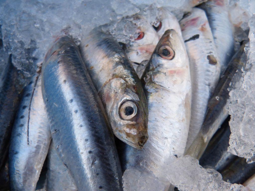 Pesce fresco, i metodi di conservazione
