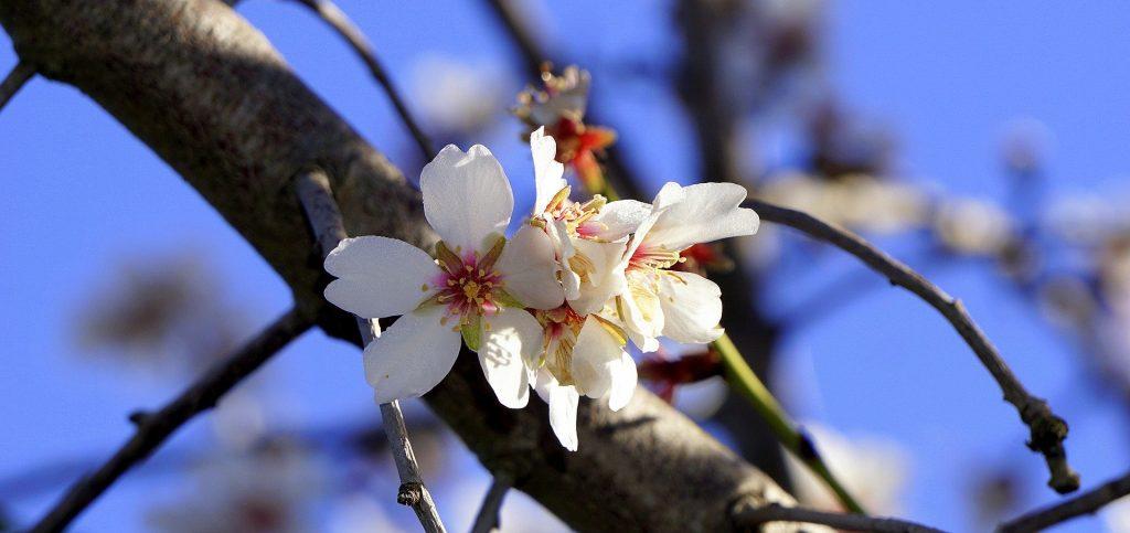 Clima, natura in tilt con finta primavera