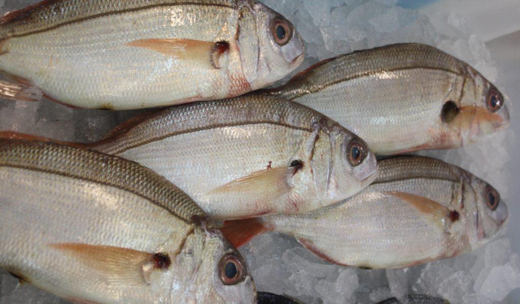 O… come Occhione, pesce gustoso dei nostri mari