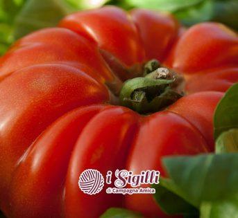 Sigilli, nel regno del pomodoro