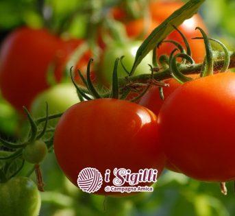 Pomodoro, il Sigillo di Campagna Amica