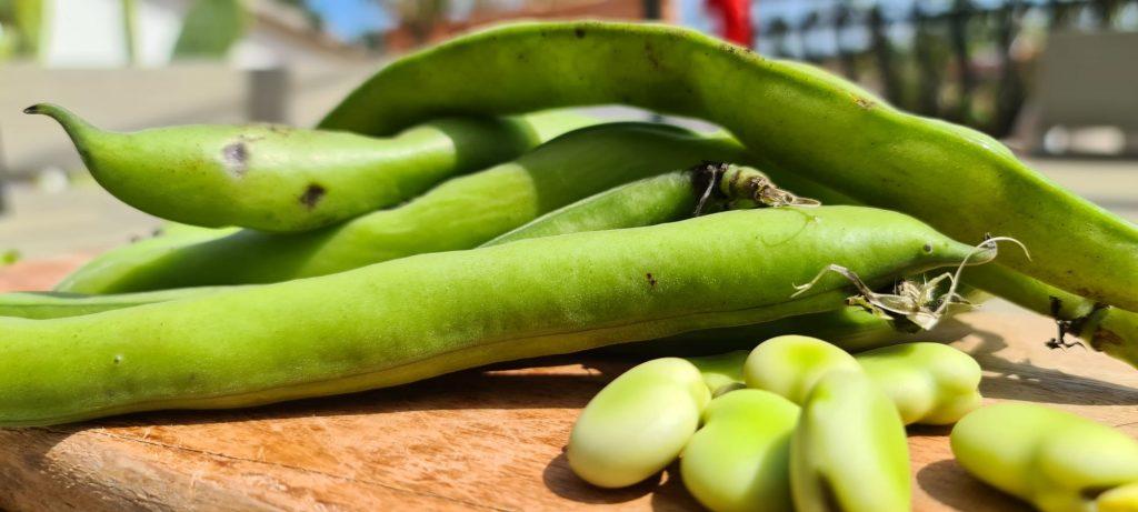 Fave, il legume che fa bene alla vista e alle ossa