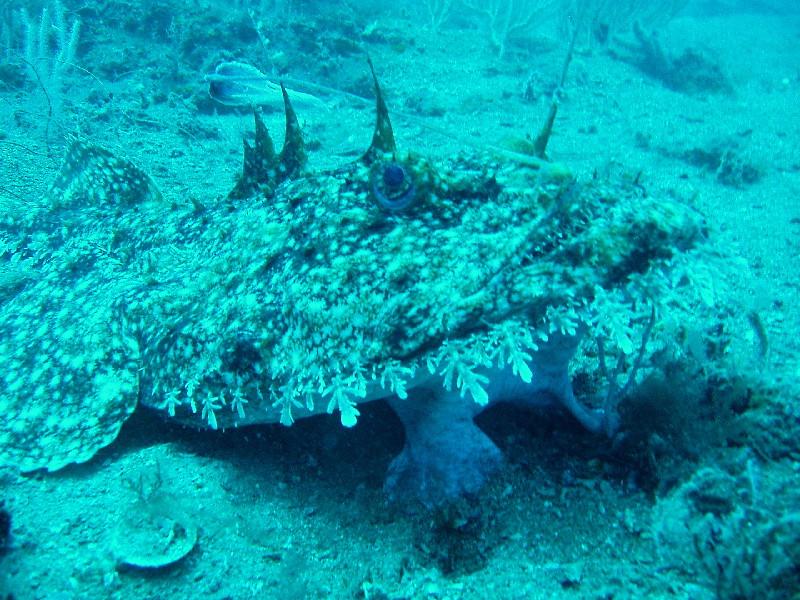 R… come rana pescatrice, pesce dall'aspetto inquietante