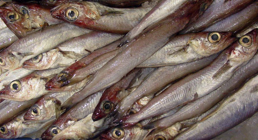 Pesce del mese, il potassolo o melù