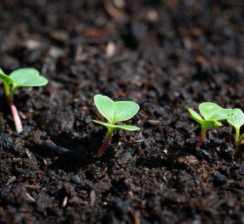 Febbraio nell'orto: i lavori, le semine e il raccolto