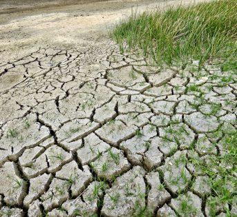 Giornata desertificazione, la siccità costa 1 miliardo all'anno